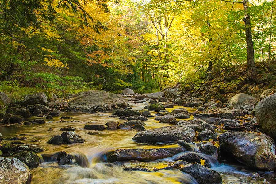 Great north woods creek