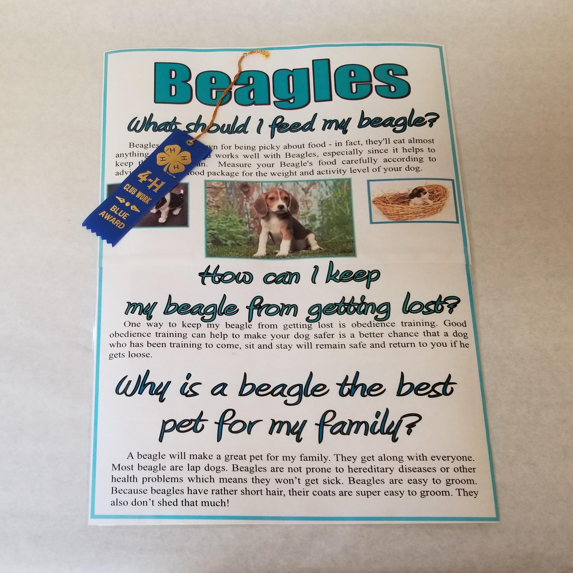 Paula, Beagles