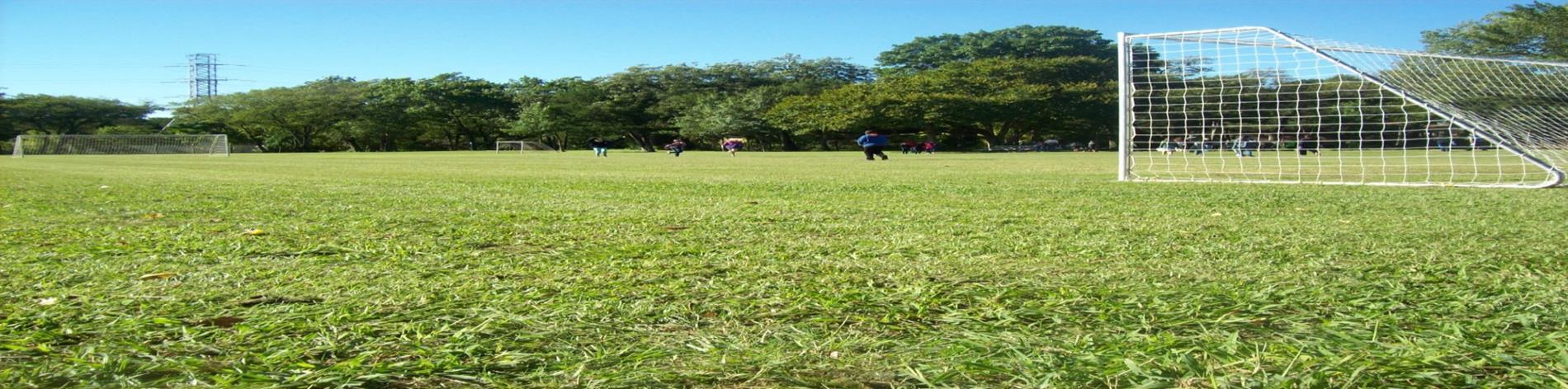 goal-field