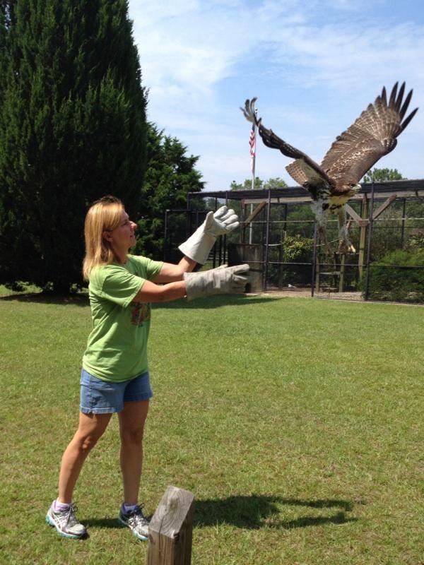 Susan releasing a hawk