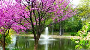 Trees blooming with fountain