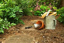Stepping Stones Gardening