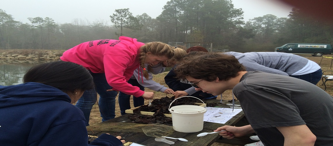 Kids investigating invertebrates at the lake