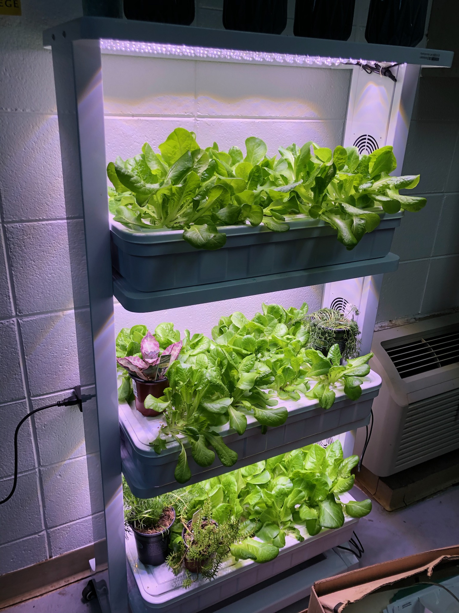 Sumter Middle Ag Class Grows Hydroponic Lettuce