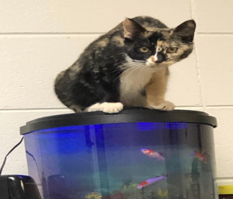 Ag Cat