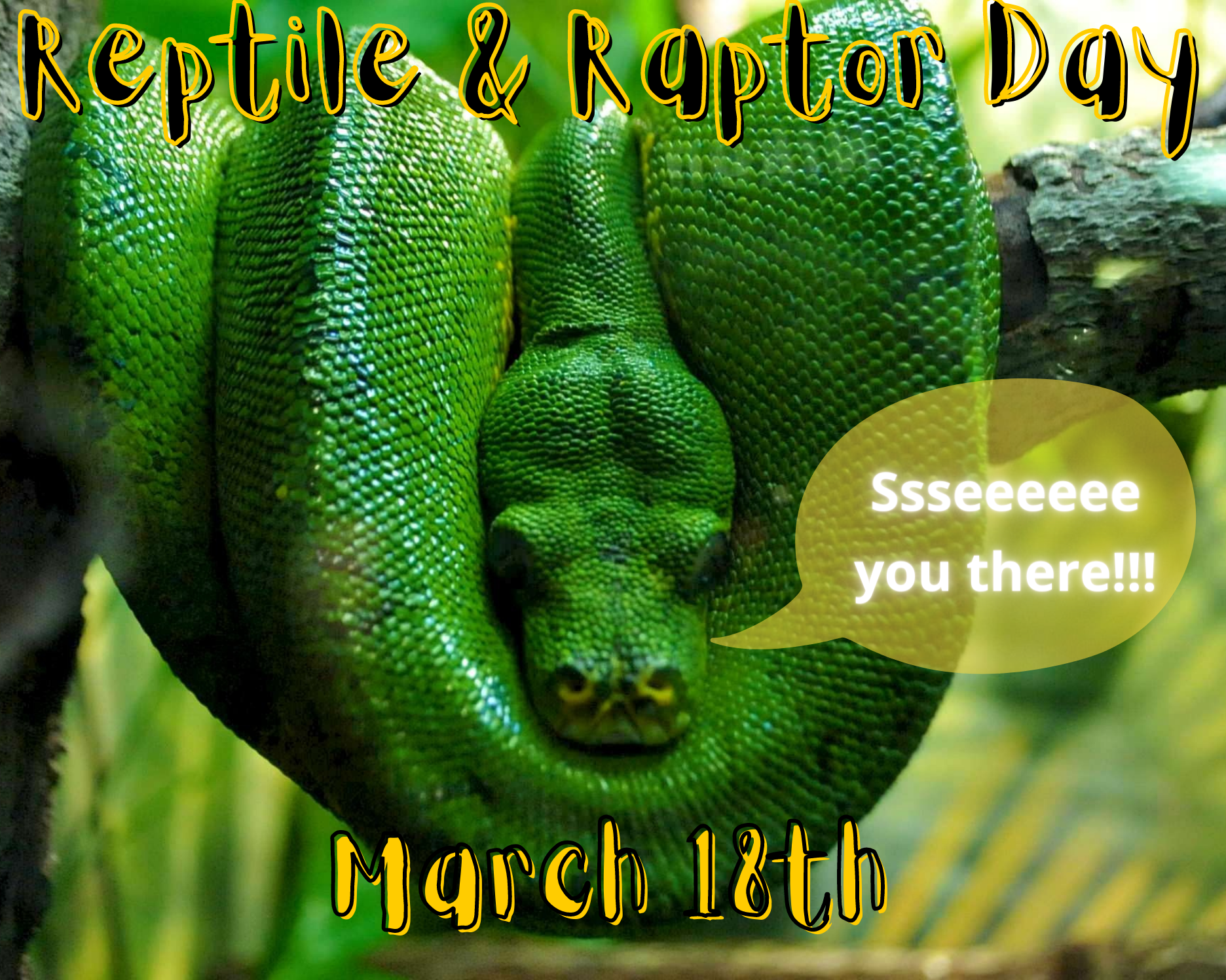 Reptile & Raptor Show Day 2021