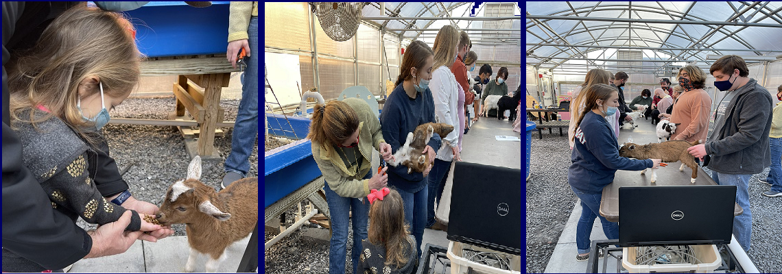 Students caring for goats
