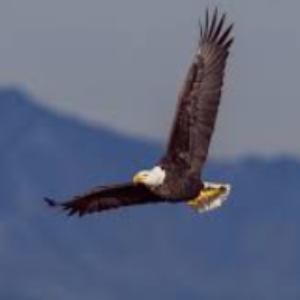 Eagle Divine Spirit