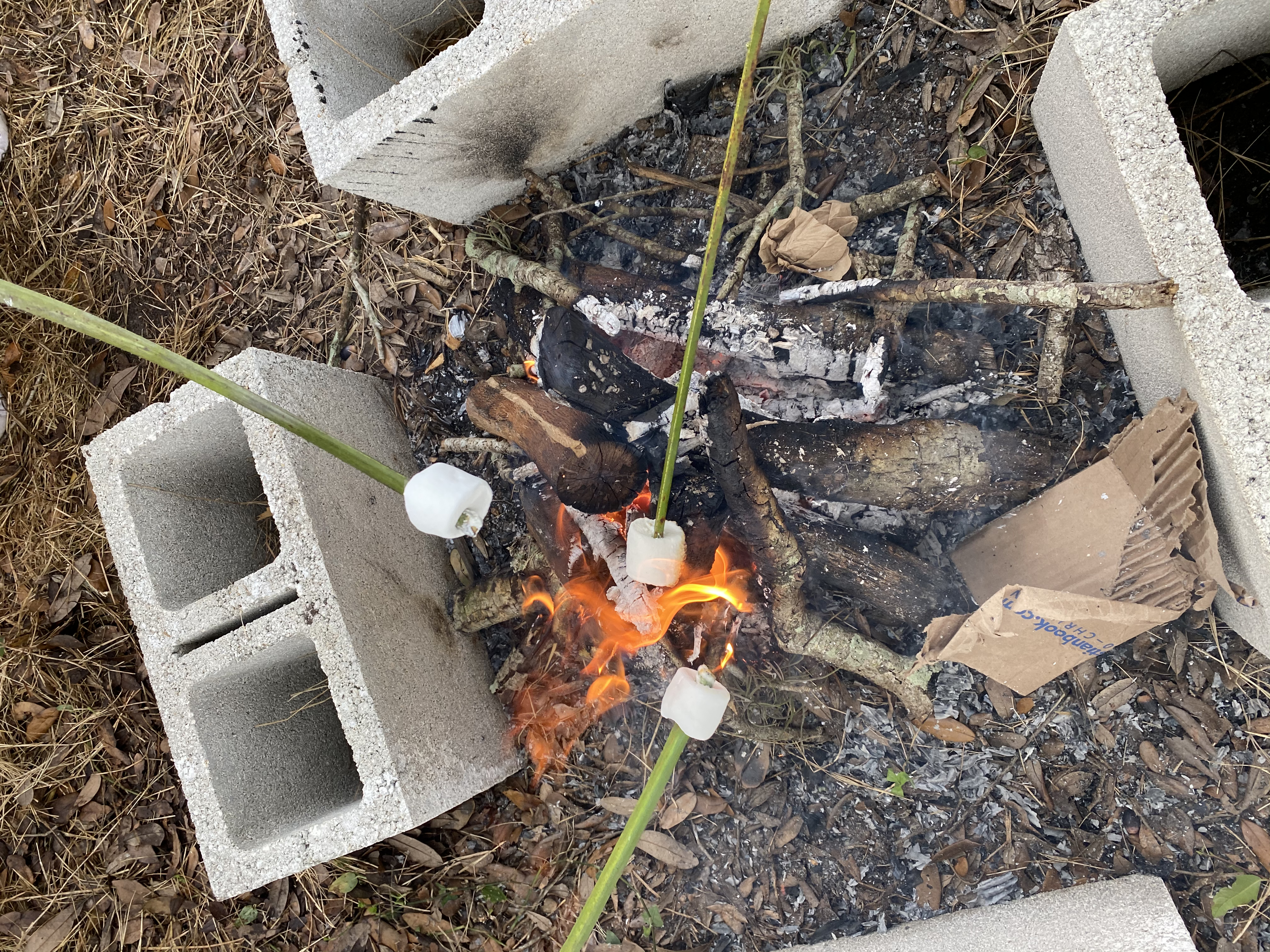 Campfire with marshmallows on palm fronds.