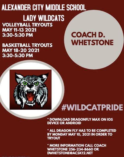 wildcat flyer