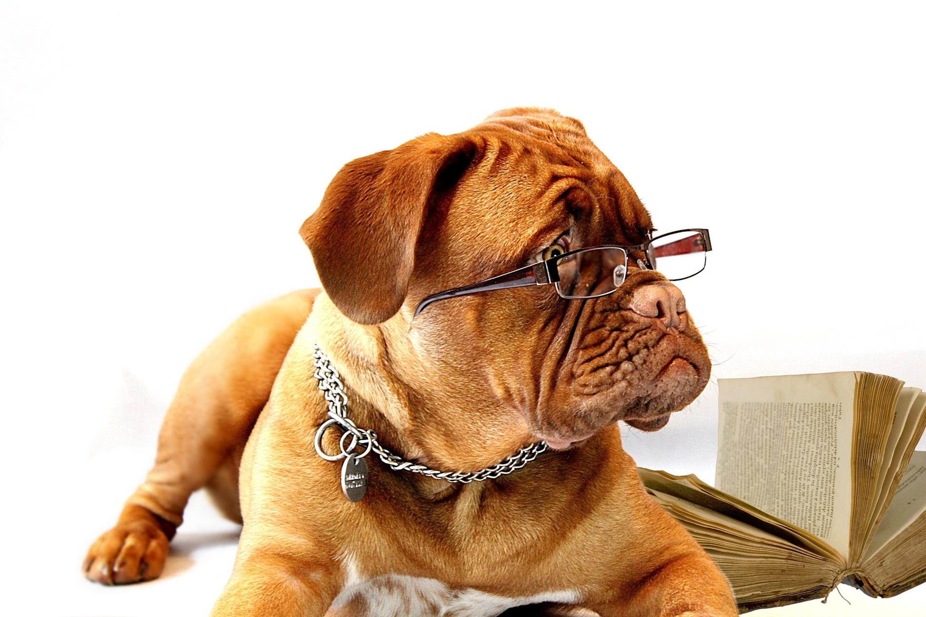 Funny long-faced dog with glasses and open book