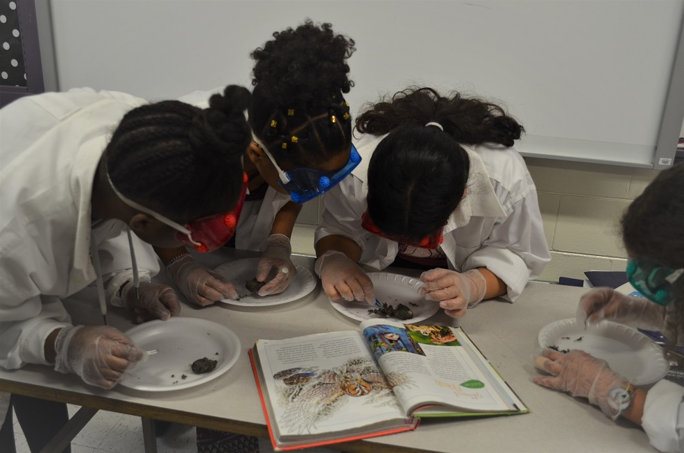 students studying owl pellets