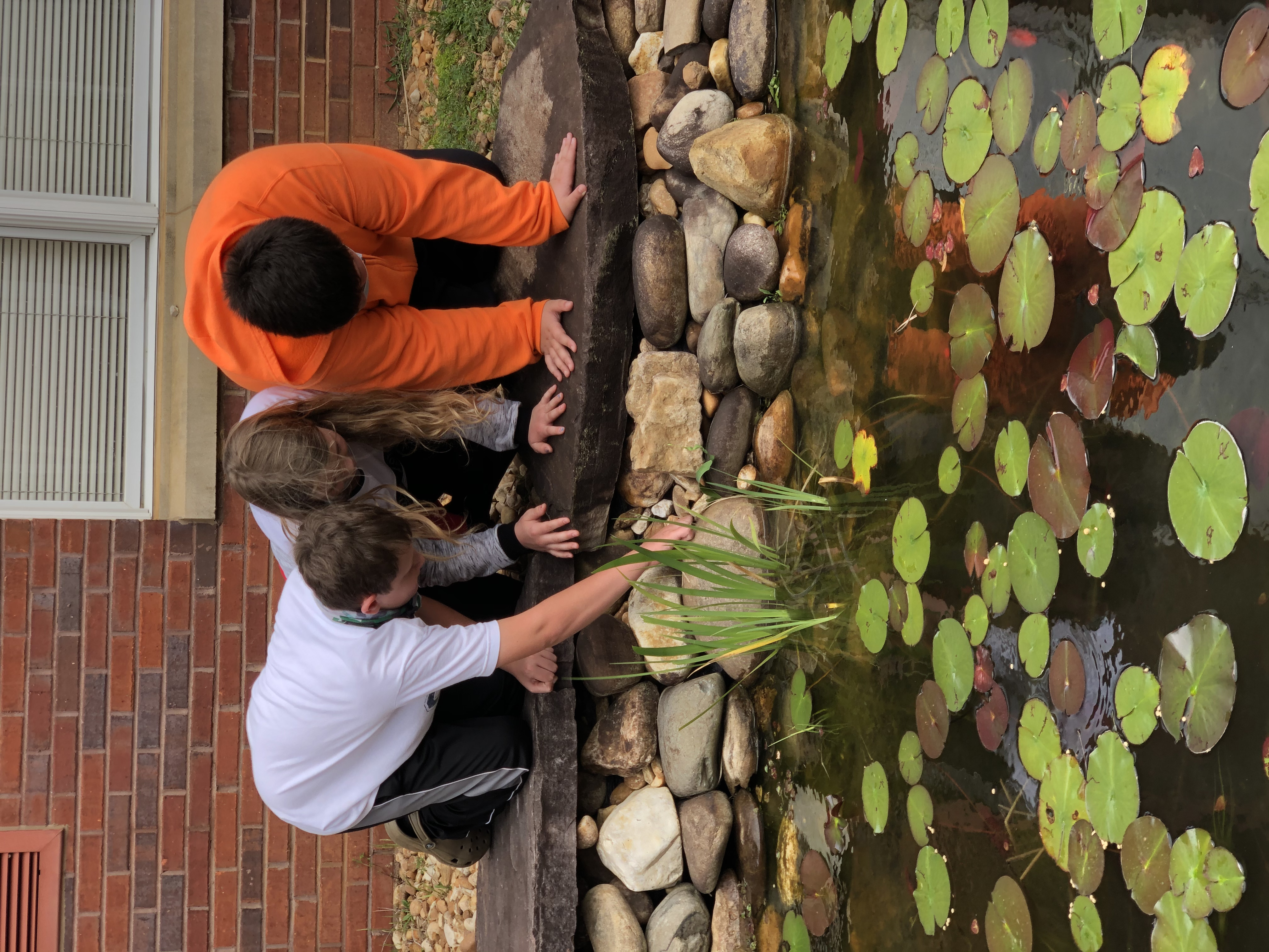 Finding Frogs in Pond