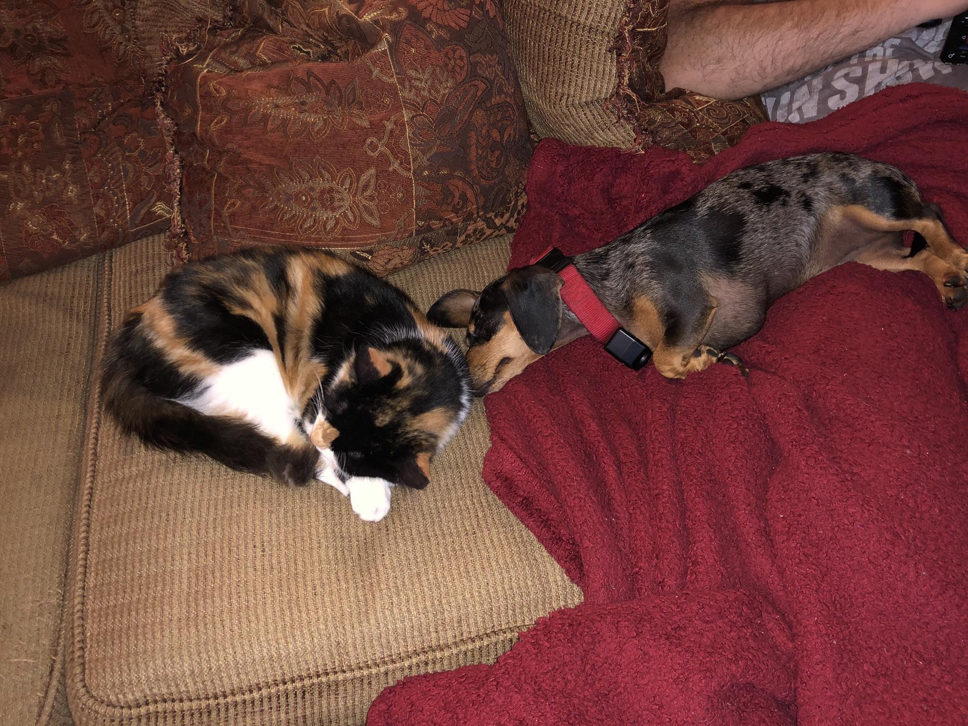 Callie and Dottie
