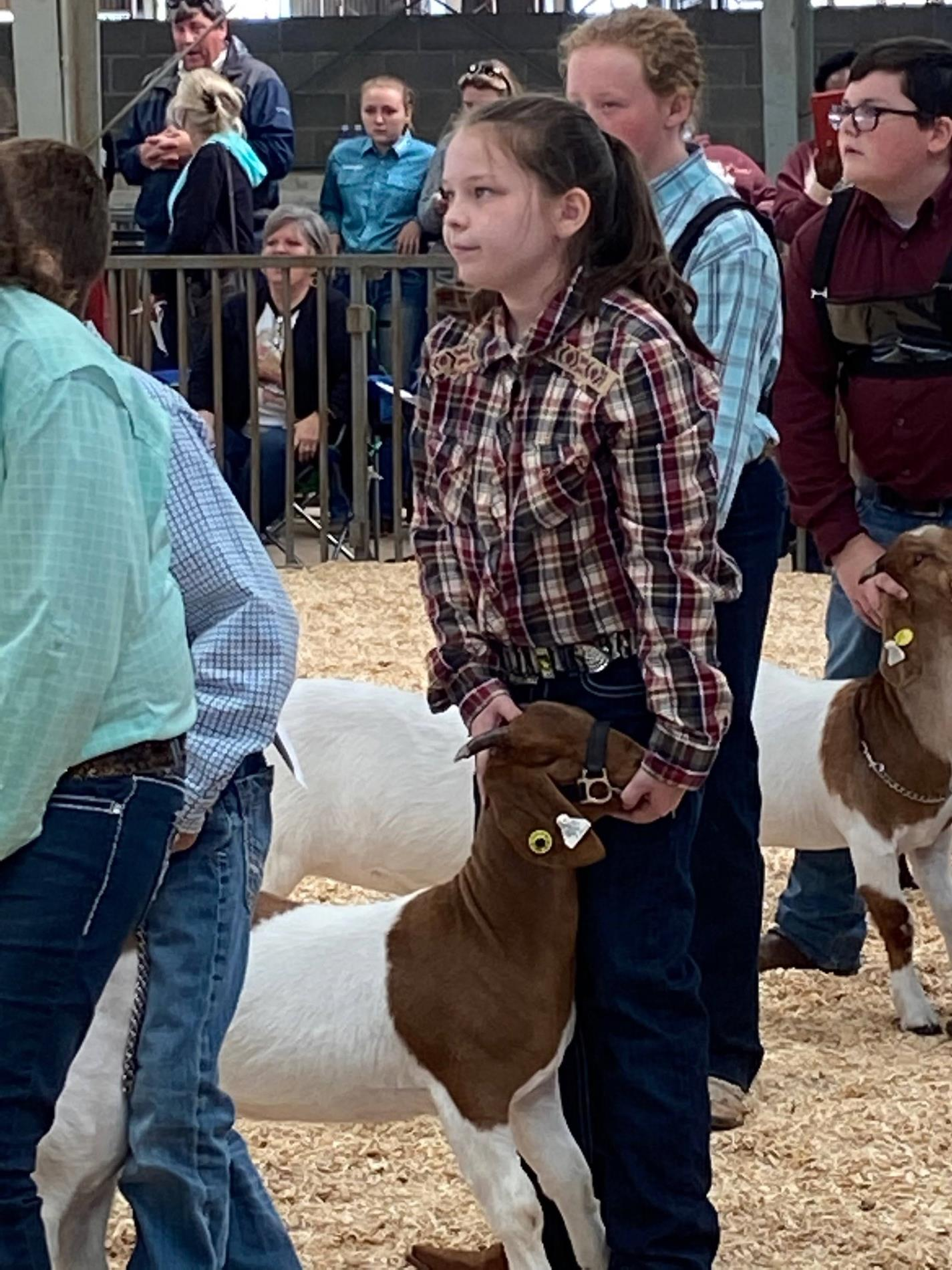 showing goats at MS State Fair