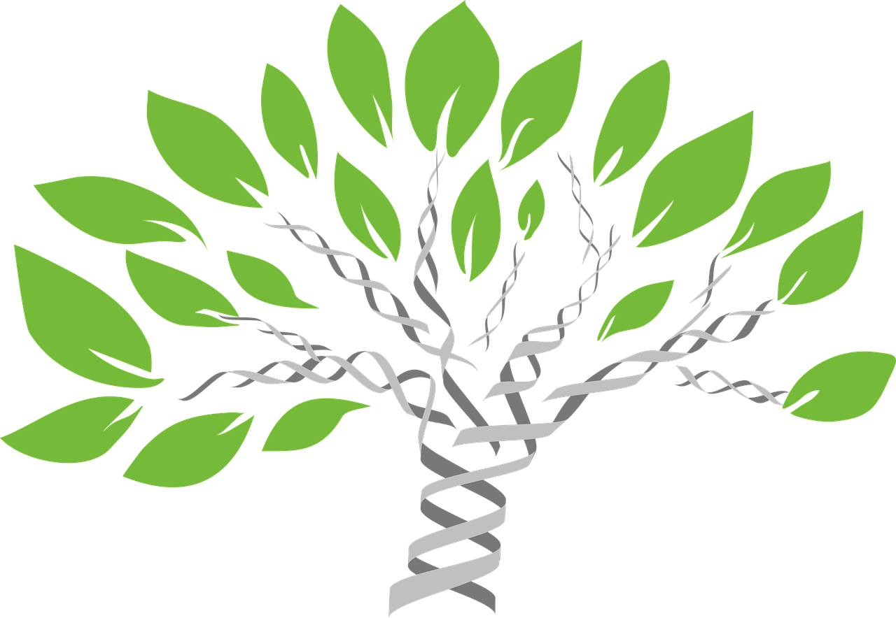 DNA tree graphic