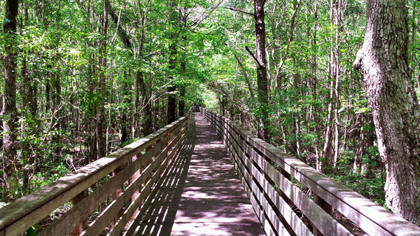Boardwalk trail at Historic Blakeley State Park