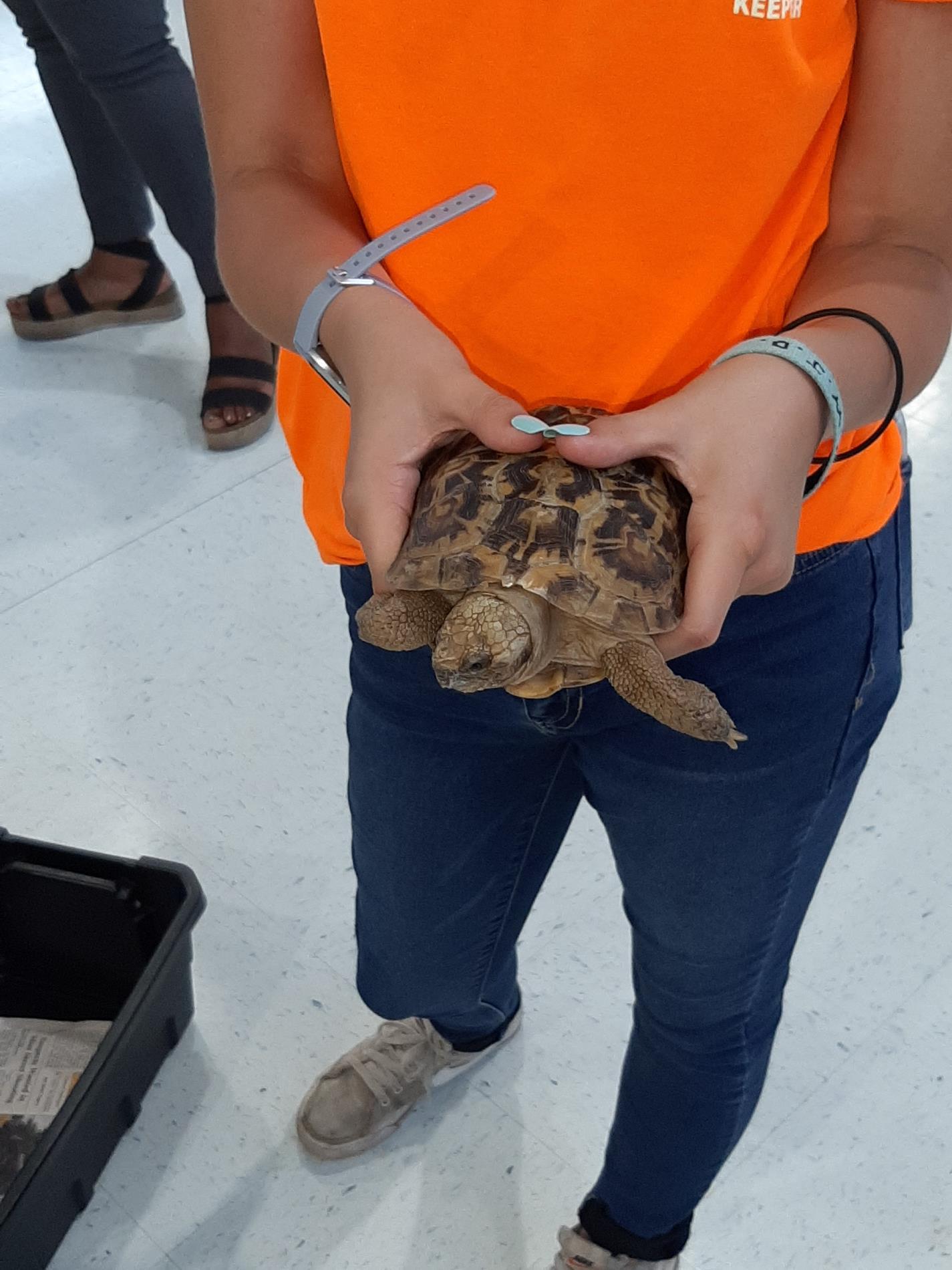 Chehaw Turtle