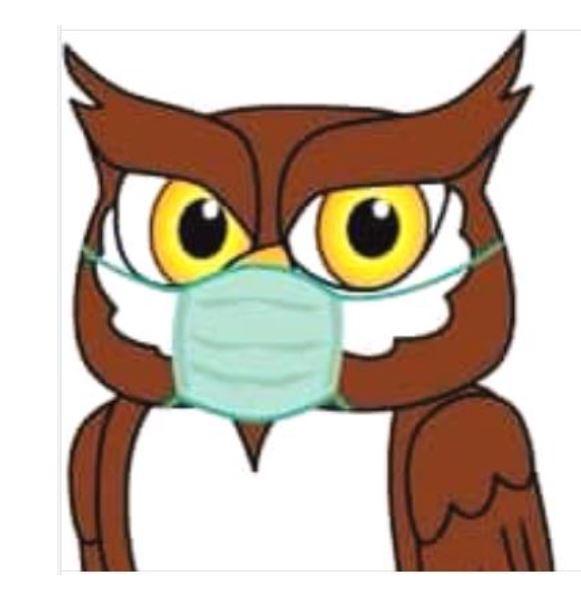 Masked Owl art