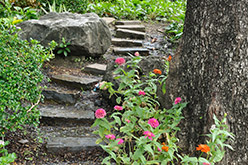 Spring Stepping Stones - Zinnias