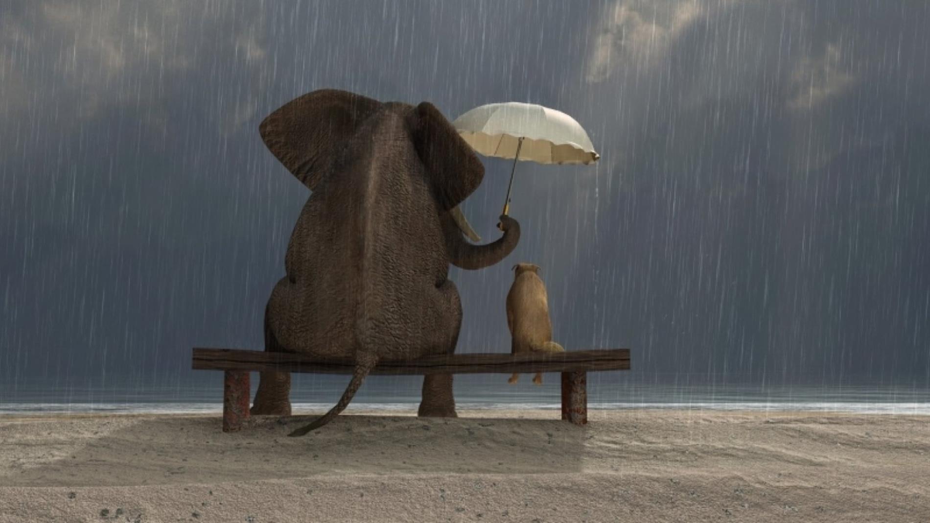 The kind Elephant