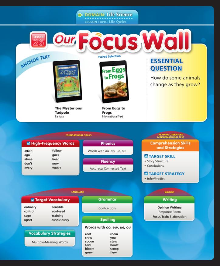 Focus 26
