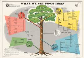 what we get from trees