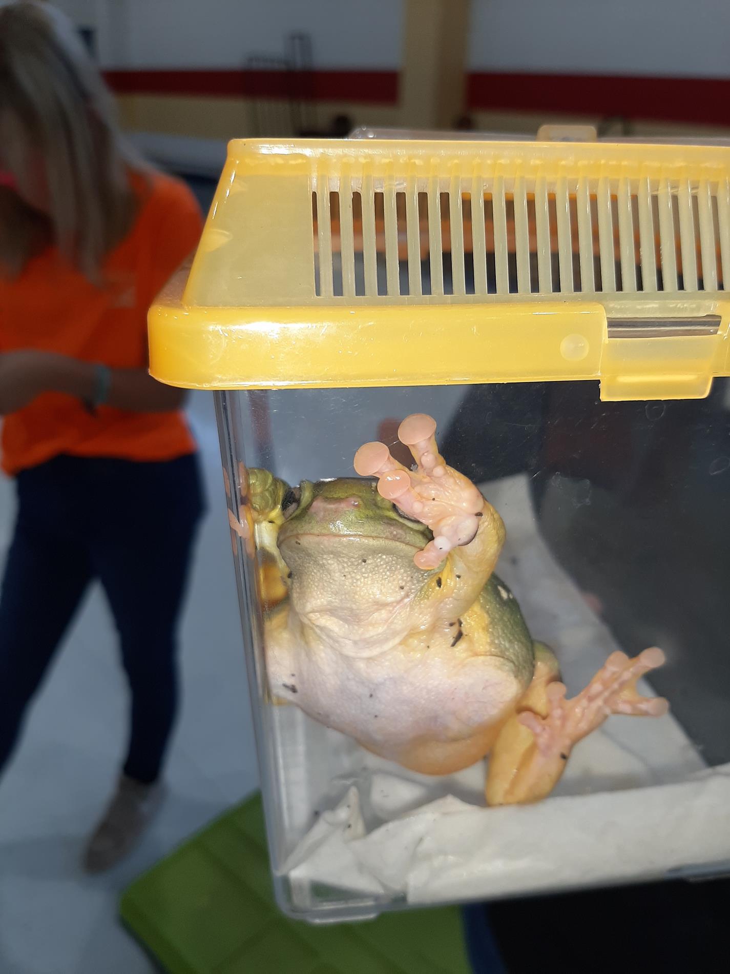Chehaw Frog