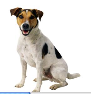 Chart Dog