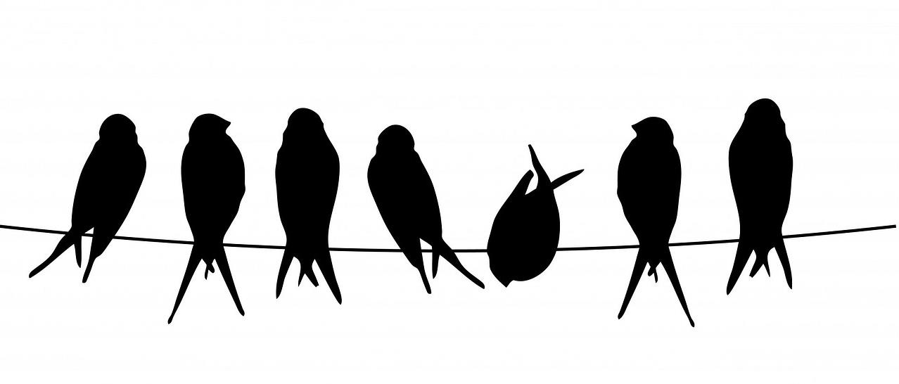black silhouettes of birds on a wire